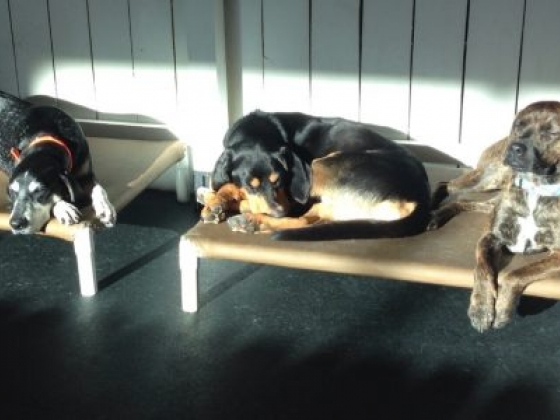 Healthy Hound Playground and Grooming Salon & Spa