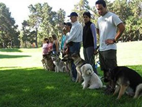 American Canine Institute