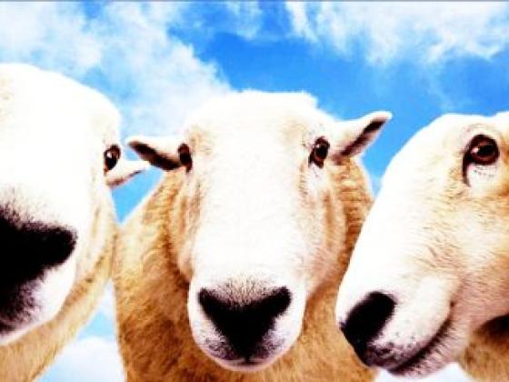 Natural Wools