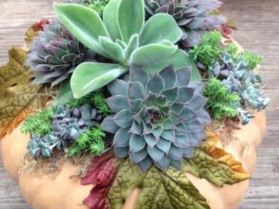 Ladera Garden & Gifts Portola Valley